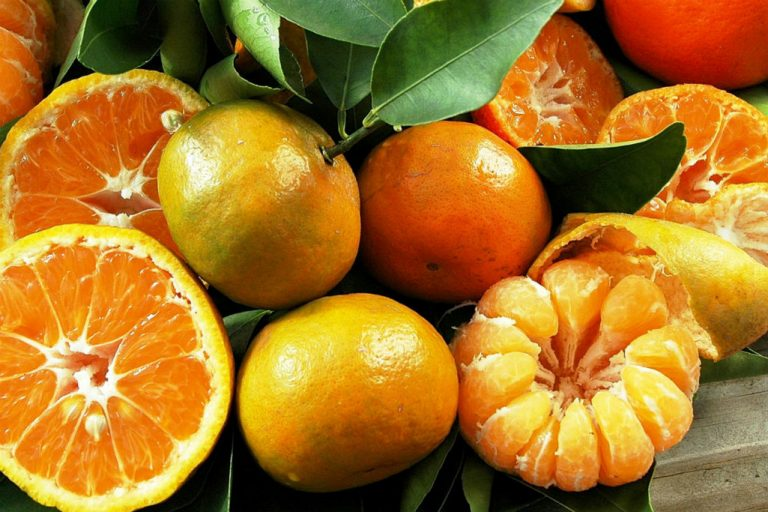 What To Eat Now: Sensational Citrus Fruit