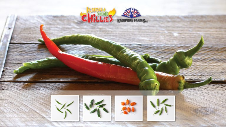 Know Your Chillies!